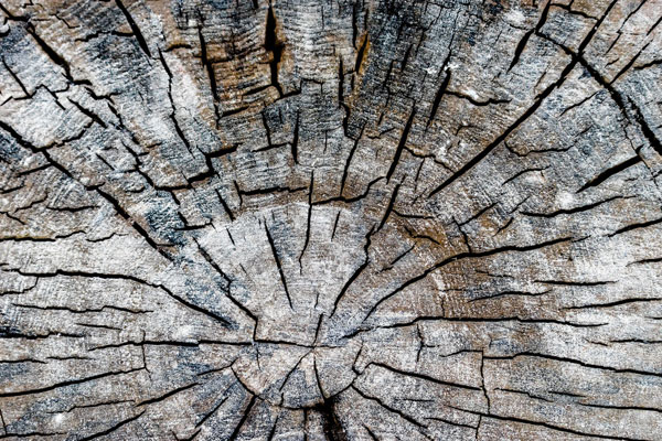 How to hollow out a tree stump?
