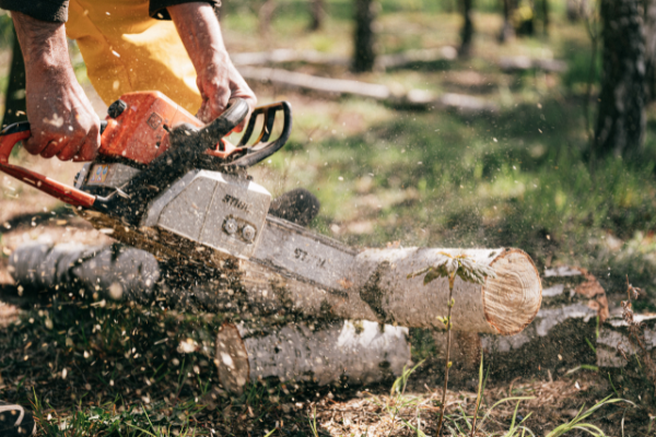How To Pay For Tree Removal – Without Spending Any Money